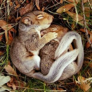 Wie Eichhörnchen schlafen
